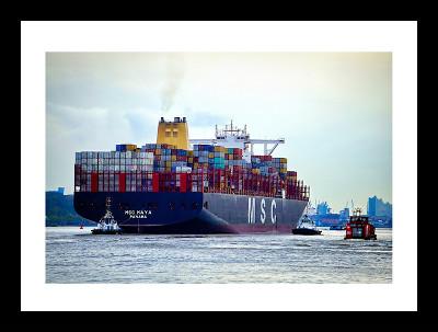MSC Maya Hafen Hamburg